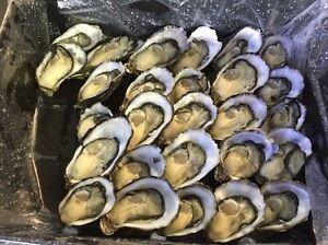 Seeking Oyster Opener Full-Time & Part-Time Available Labrador Gold Coast City Preview