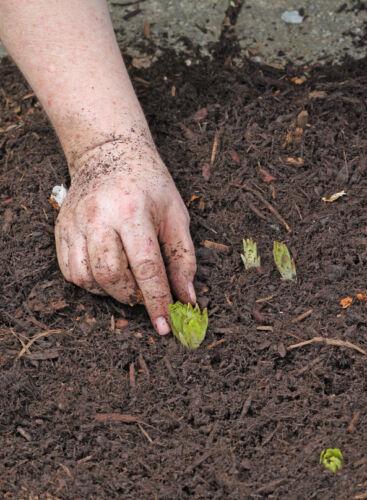 Wie berechne ich die Menge, die ich an Rindenmulch für meinen Garten benötige?