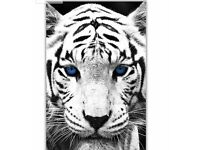 Portrait white tiger blue eyes canvas wall art