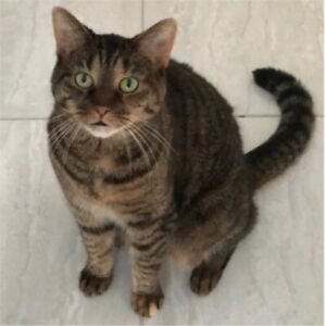 Looking for our lost cat - north oshawa