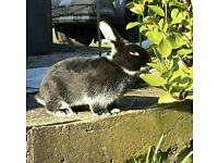 2 Beautiful 16 month old female bunnies for SALE