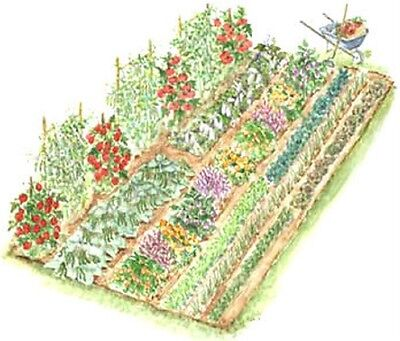 ❋Heirloom 20 Varieties Vegetable Seed Collection❋OP❋Non GMO❋Non Hybrid❋Survival