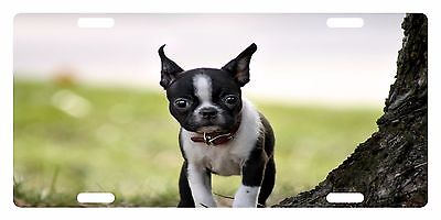 BOSTON TERRIER DOG Custom License Plate CANINE BREED Emblem TREE Version Boston Terrier License Plate