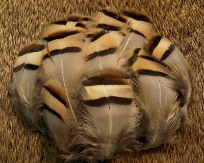BLUE JAY WING FEATHERS,FLY TYING ART/&CRAFT JEWLELERY,HAIR,DESIGN, EURASIAN 30