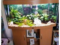 4FT JUWEL TANK AND STAND