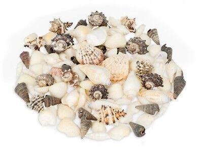 NaDeco® Muschelmix schwarz weiß 1kg | weiße und schwarze Dekomuscheln | Muscheln