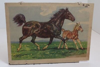 Old Schulwandtafel Wall Chart Horse Pony Foal on the Meadow Eisenschink