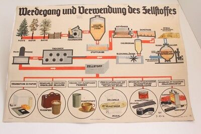 Schulwandtafel Wall Chart Werdegang And Use Des Zellstoffes Culture Publisher