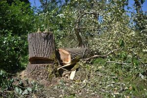 Tree removal and yard cleaning