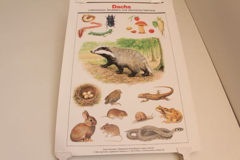 Schulwandkarte Wall Chart Badger Habitat Beutetiere Herbal Food
