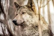 The Wolf Custom PC Intel i5 Speed. *Lifetime Warranty Griffin Pine Rivers Area Preview
