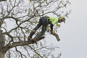 Tree service,Treelopper Burbank Brisbane South East Preview