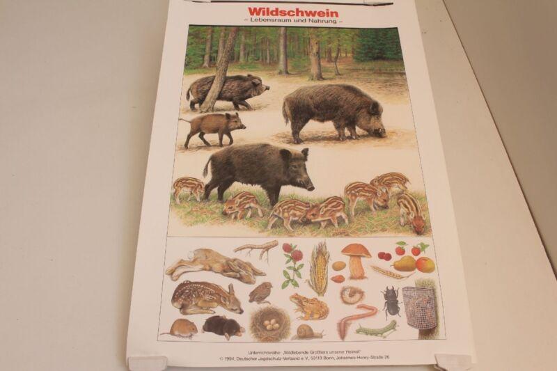 Schulwandkarte Wall Chart Wall Map Wild Boar Habitat And Food