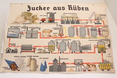 Old Schulwandtafel Wall Chart Sugar From Beet Culture Publisher