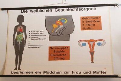 Schulwandkarte Wall Chart Die Female Geschlechtsorgane Enlightenment Vintage 70s