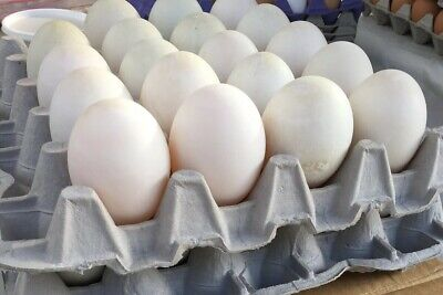 12 Fertile Barnyard Mix Duck Eggs - Ancona Pekin Khaki Campbell