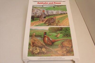 Schulwandkarte Wall Chart Card Rebhuhn And Pheasant IN Your Lebensräumen