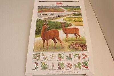 Schulwandkarte Wall Chart Wall Map Deer Habitat And Food