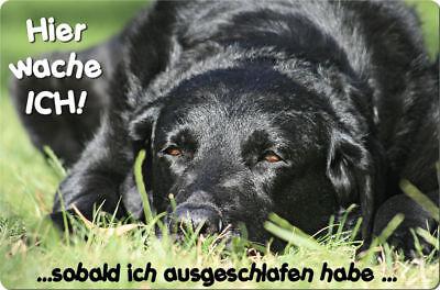 LABRADOR - A4 Metall Warnschild Hundeschild Alu SCHILD Türschild - LAB 31 T15 S