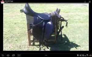 Ladys horse riding Status saddle Albany Albany Area Preview