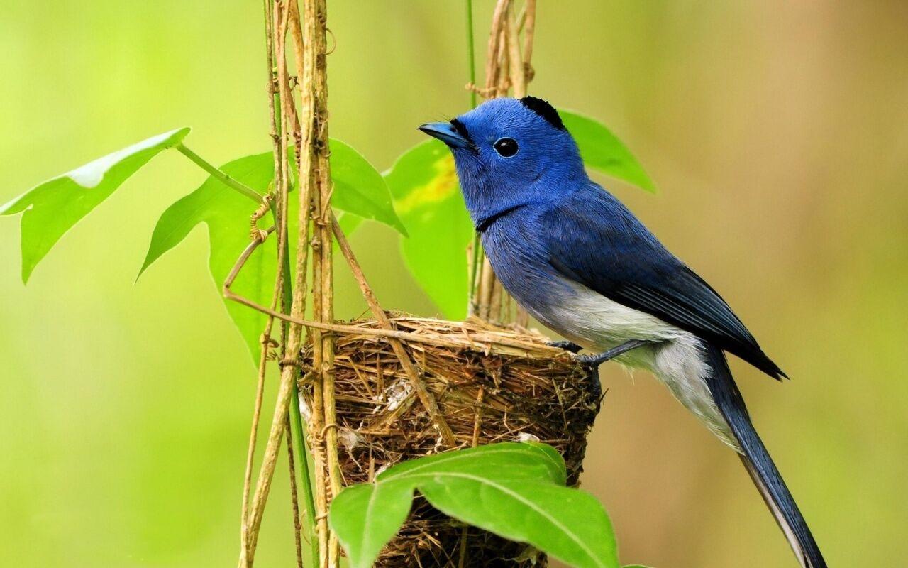 Birdie's Nest
