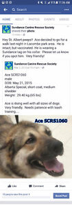Lost dog from Local Rescue- ST. ALBERT AREA