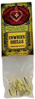Cowries Shells (Coquilles Cauries) Voodoo Charme et Sortilege Pagan Wicca Ritual