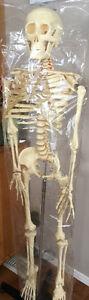 Articulating training skeleton
