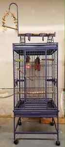 Large bird cage with toys