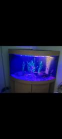Corner fish tank plus