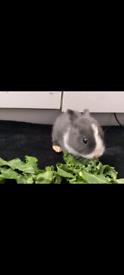 5 week old baby rabbit