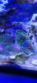 Various corals for sale