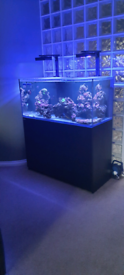 Red Sea Reefer 350 Aquarium and various equipment