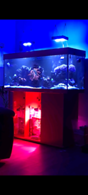 4ft marine salt water fish tank complete set up