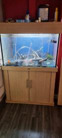 300l fishtank