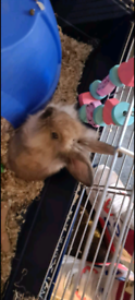 Female rabbit and cage