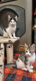 Playful kittens ready for a forever home