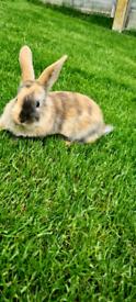 7 beautiful babie rabbits