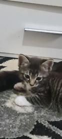 Nice kittens