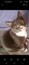Cat Feline Domestic