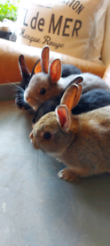 2 very cute bunnies for sale
