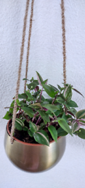 Hanging plants £8 each