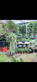 Healthy plant nursery