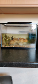 Cold water tank with fish