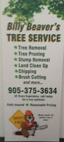 Billy Beaver Tree Service