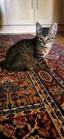 Wonderful tabby kittens