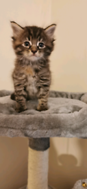 5 cute kittens. Yes available