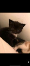 Last Kitten!!!!