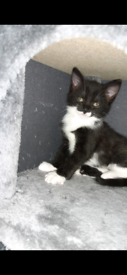Kittens for sale to loving home
