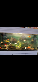 4ft fish tank stand and hood